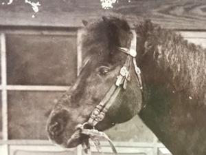「春風の肖像」 初代院長の往診馬 オールドクリニックの収蔵品⑤
